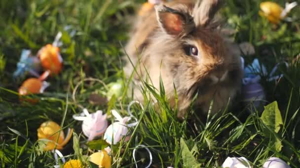 Roztomilý malý hnědý velikonoční zajíček holandský klusat jíst trávu, v blízkosti velikonočních vajíček. Záběr zblízka, zpomalený pohyb
