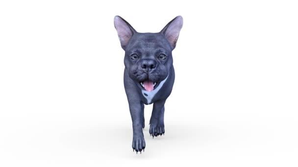 3D vykreslování cg psa