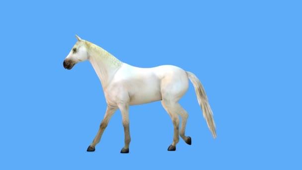vykreslení 3D těžiště koně