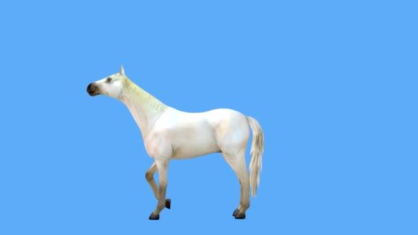 3D CG rendering of horse