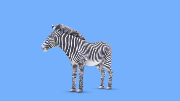 3D CG renderelés zebra