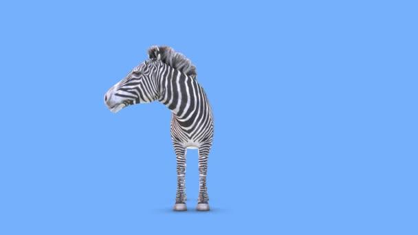 vykreslování zebry 3D CG