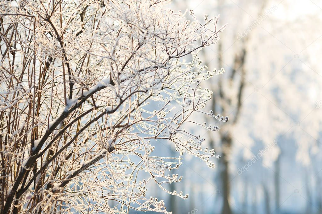 Wallpapers branch bush in hoarfrost on a background of snow-covered trees