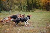 Vycvičené psy různých hraje v parku na den