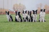 Csoport-ból kutyák együtt