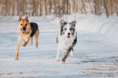 Dog in winter. Snowfall. Winter walk