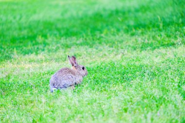 Hare in the grass in the forest.