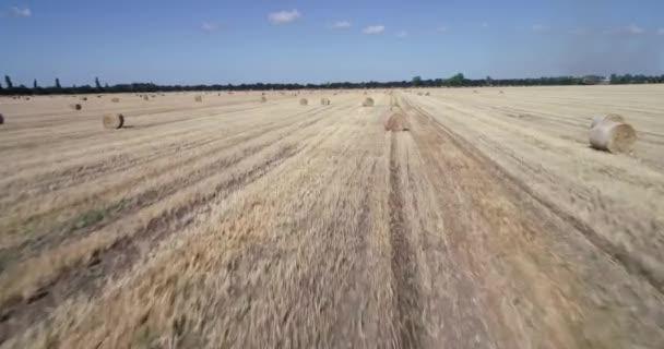 harvested field. Wheat fields