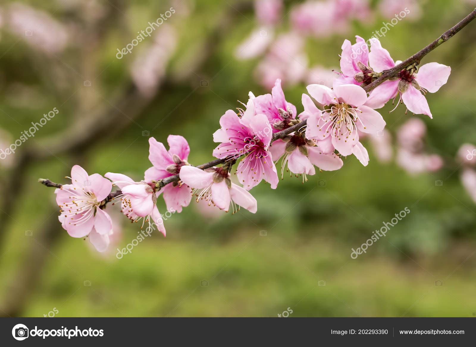 Fleur Pecher Fleur Photographie Esindeniz C 202293390