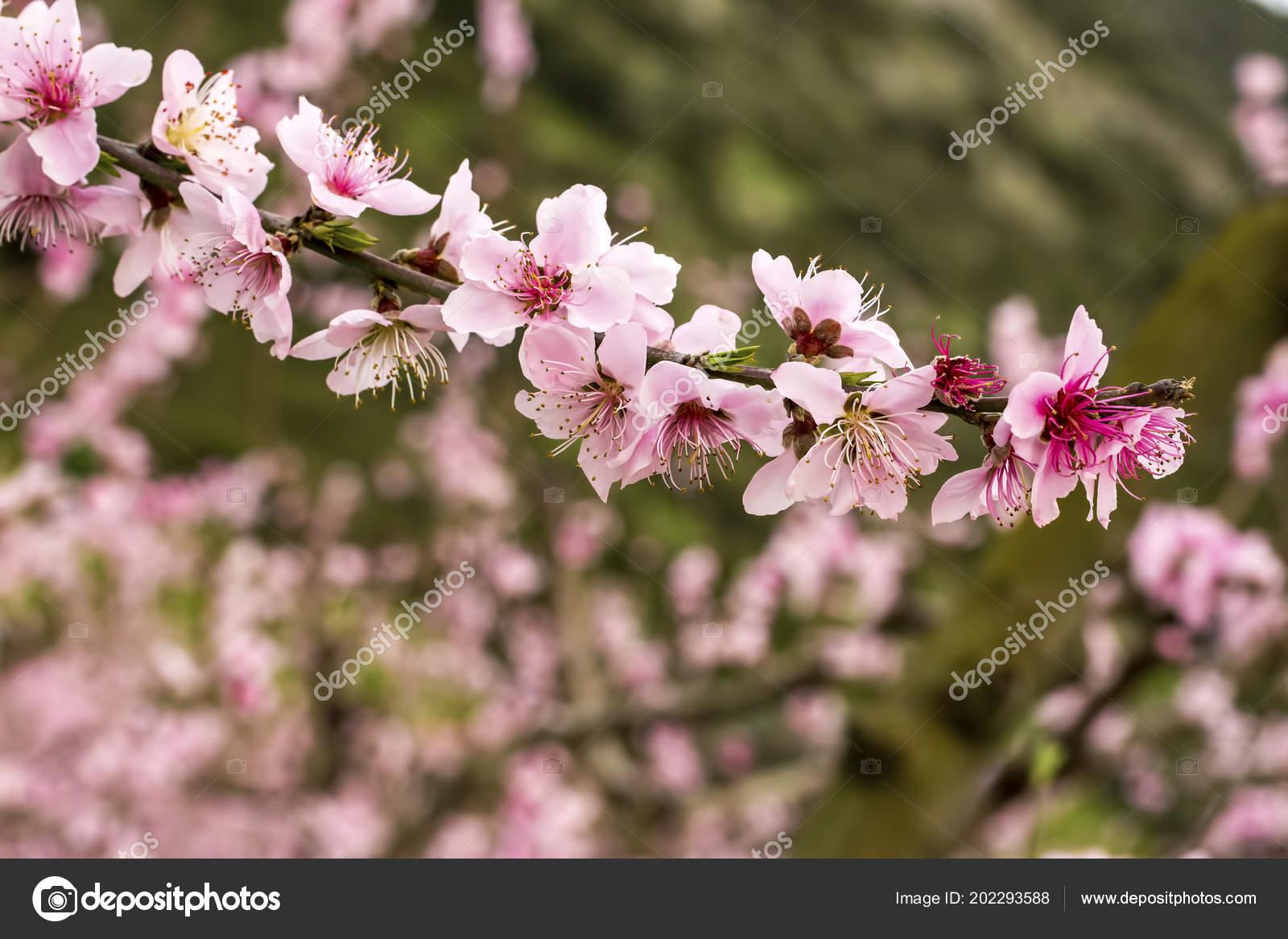 Fleur Pecher Fleur Photographie Esindeniz C 202293588