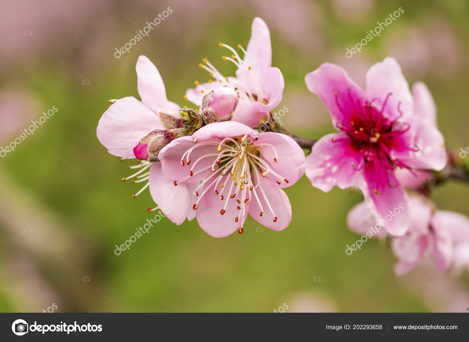 Fleur Pecher Fleur Photographie Esindeniz C 202293658