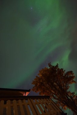 The polar arctic Northern lights aurora borealis sky star in Norway Tromso in the farm village  mountains