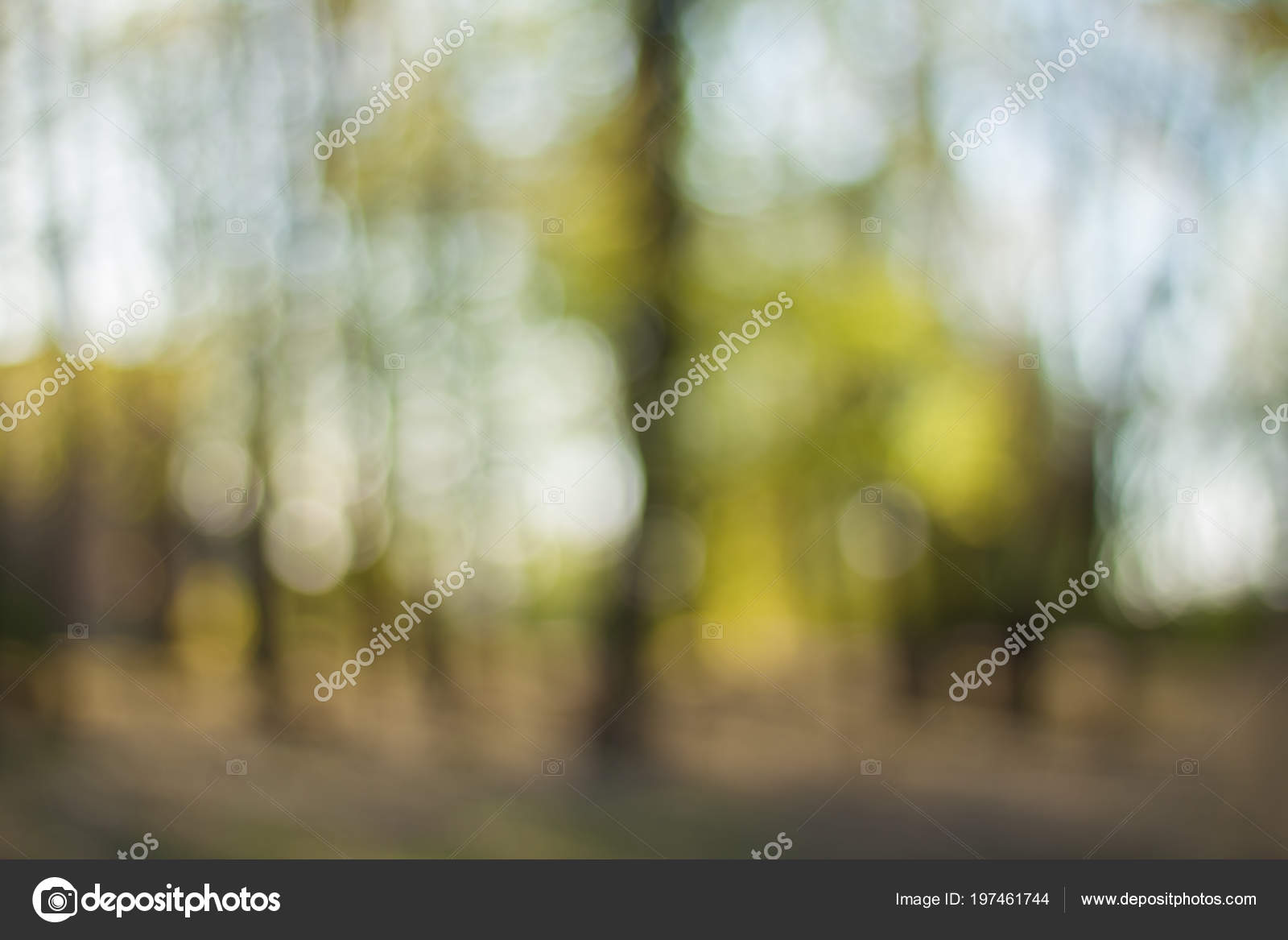 Blurry Nature Wallpaper Forest Bokeh Background Green ...