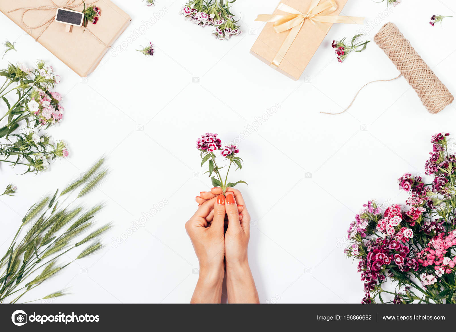 Women Hands Holding Small Flower Bouquets Gifts White Background Top