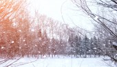 Zimní krajina zasněžené plochy. Park v zimě v