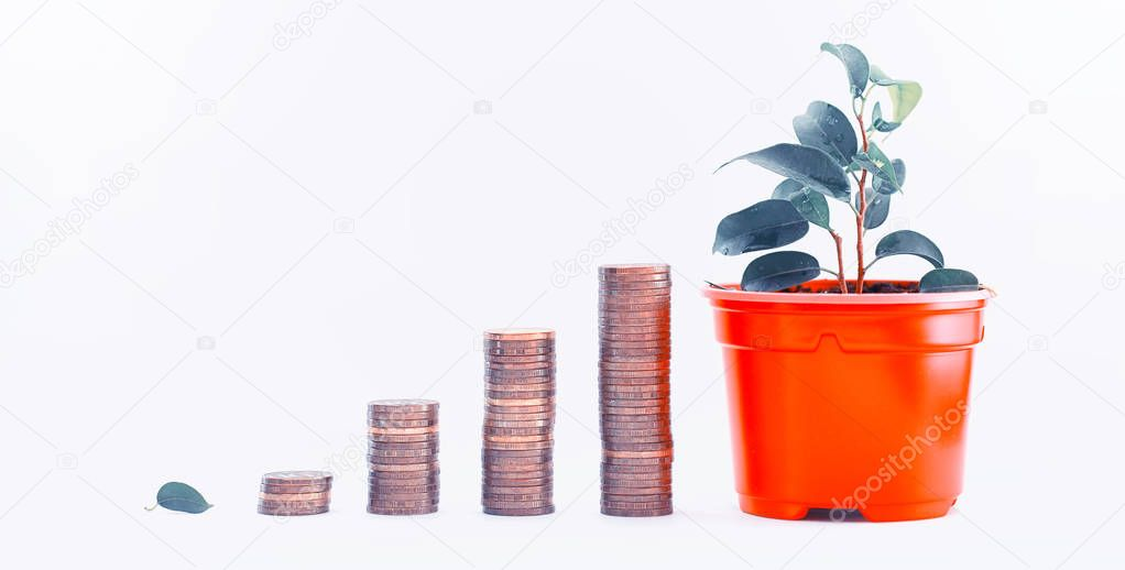 A potted plant and a pile of coins a concept of income