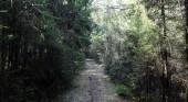 Fényképek Fenyves erdőben. Erdő mélyén. Utazás erdei ösvényeken. T