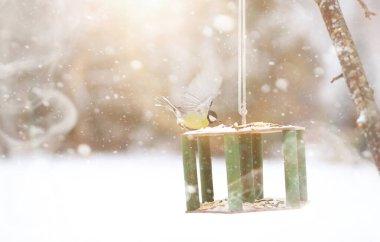 Little titmouse on the trough eats. Winter bird.