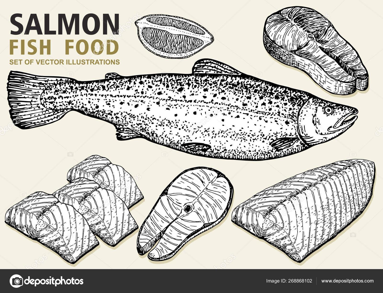 set salmon vector illustration fillet steak fish salmon sketch style stock vector c luisvv 268868102 set salmon vector illustration fillet steak fish salmon sketch style stock vector c luisvv 268868102