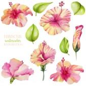 Akvarell hibiszkusz virágok és levelek gyűjtése, kézzel festett elszigetelt fehér háttér