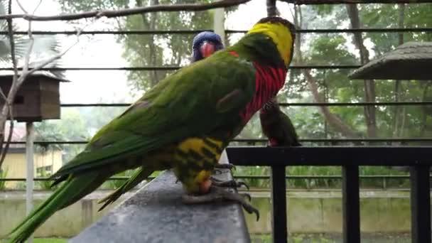 Nádherný duhový Lorikeet (Trichoglossus moluccanus) ptáci, usazený na zábradlí větve stromů