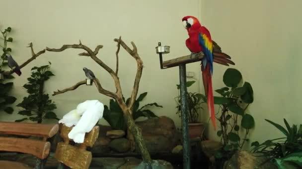 Bílý a krásnej červený papoušek šarlatový červený pták na stojovém stojanu
