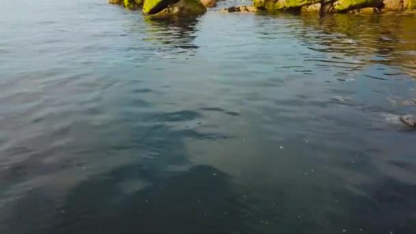 roztomilá zvířátka v modré čisté vody