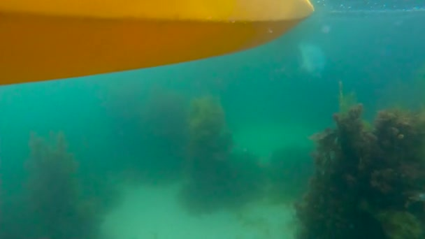 Frau in gelb Boot in blauen sauberes Wasser mit niedlichen Wildtier
