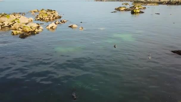 süße wilde Dichtungen in blauen sauberem Wasser in der Nähe von Felsen