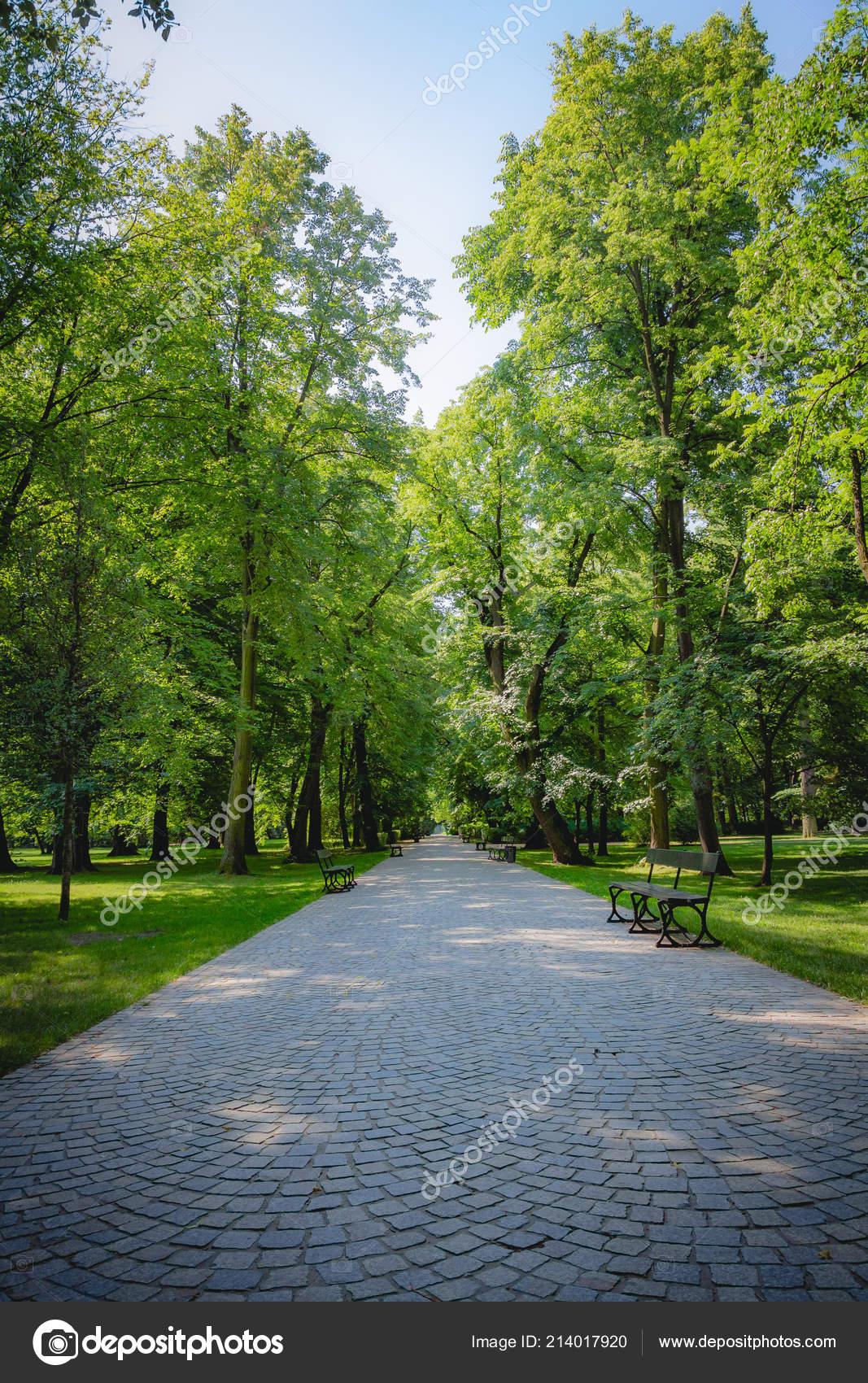 Schöne Gasse Mit Grünen Bäumen Lazienki Park Warschau Polen