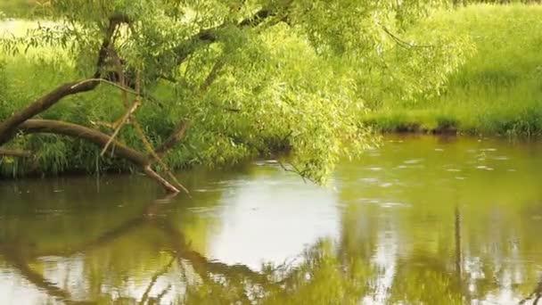 Deštný prales s proud teče přes to. Dešťové kapky kapat do řeky kruhy na vodě