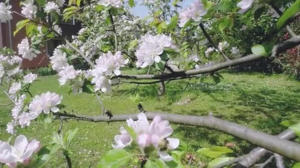 Kvetoucí strom, Sakurská květina na jaře. Podstata a jarní pozadí