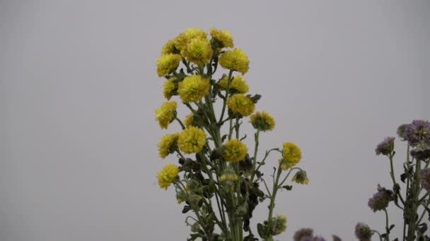 4 k Uhd filmszerű felvétel, színes trópusi virág, szelektív szoros makró-fókusz.