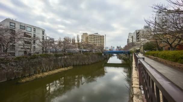 4 km-es időeltolódás a Meguro River Parkban, Tokióban a korai cseresznyevirág idején (sakura hanami). Ez az egyik leghíresebb hely, hogy megtekinthesse sakura virág. Közelíts rá!