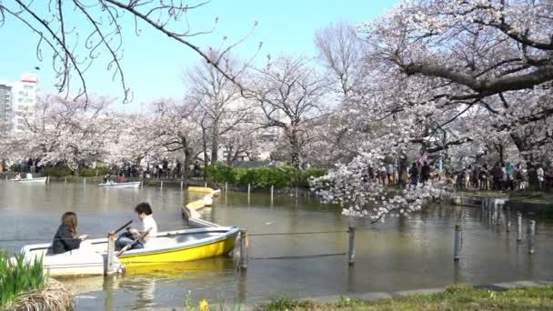 Tokyo, Japan - Circa April, 2017: 4k b-roll cinematic footage of Tokyo National Park with crowd of people enjoy cherry blossom (sakura hanami). It is one of the most famous places to view sakura flower.