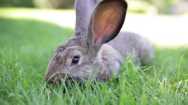 Meat-eating and vegetarianism. Animal fur. Animal protection. The cosmetics are tested on rabbits. Convention for the Protection of Experimental Animals. Against the slaughter of animals