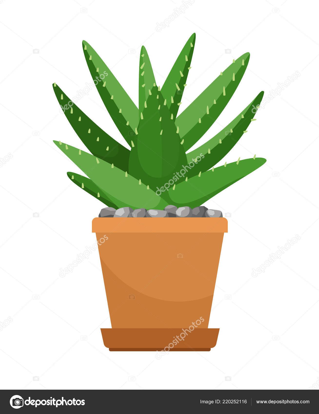 L Aloe Vera En Pot De Fleur Image Vectorielle Ssstocker