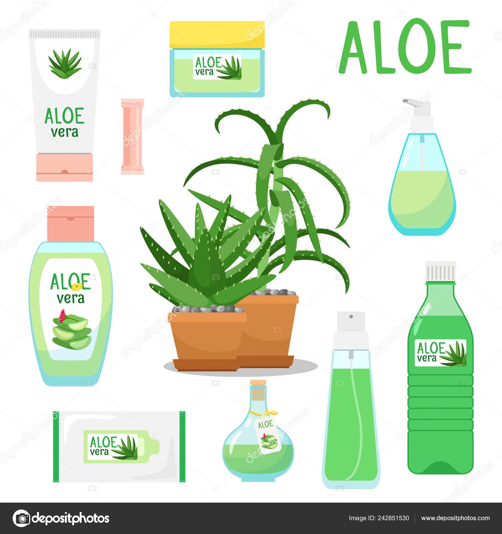 Produits Et Aloé Vera Image Vectorielle Ssstocker 242851530