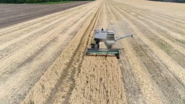 Staré kombajn sklízí pšenici. Letecký