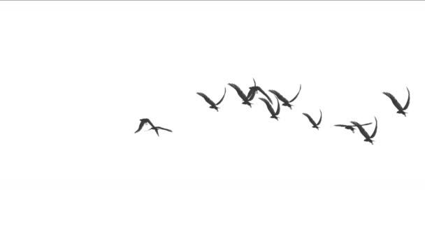 4k hejno holubů ptáci létat nad, stěhovaví ptáci eagle zvířat pozadí