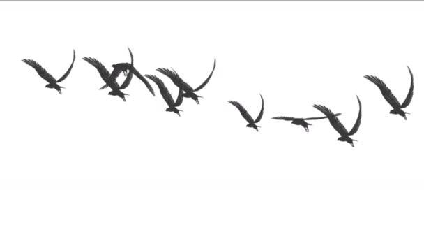 4k Schar von Tauben Vögel fliegen über, Zugvögel Adler tierischen Hintergrund.