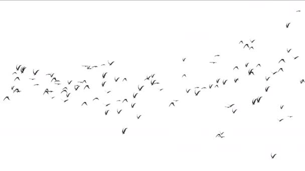 4k Schar von Tauben Vögel überfliegen, Zugvögel tierischen Hintergrund.