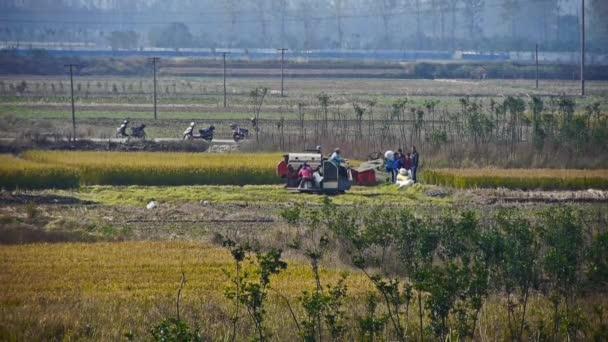 Farmář sklízí pšenici s kombajn v poli.