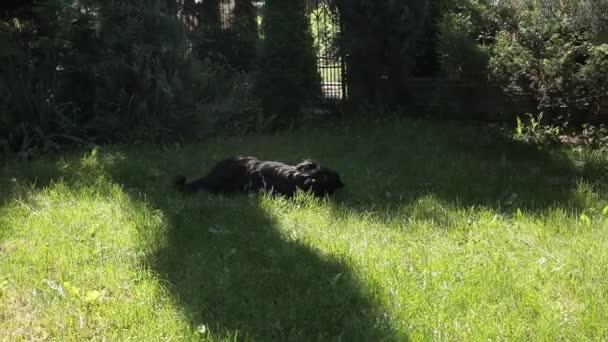 ein schwarzer Hund auf einem schönen grünen Rasen beißt einen Knochen