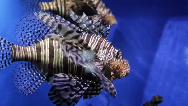 The underwater world of marine life. The oceanarium is surrounded by various exotic inhabitants of the seas. Fish in the ocean