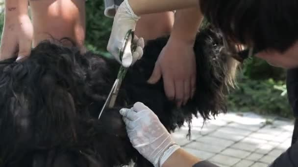Dog grooming close-up. Dog care.
