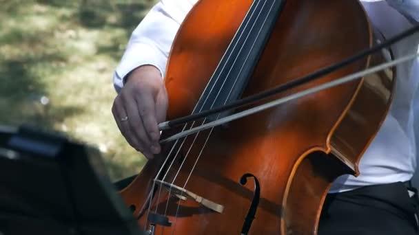 Cselló zenész. Komolyzenei koncert
