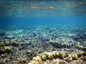Fotografie podvodní pohled na korály Coron island Busuanga Filipíny