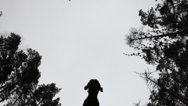 Hund springt über die Kamera, Blick von unten