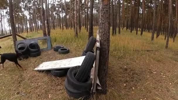 Ein Dobermann springt langsam über eine Barriere, ein Waldstück zum Training